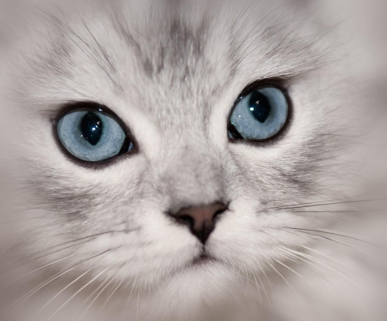 Co jest najważniejsze w karmieniu kotów?