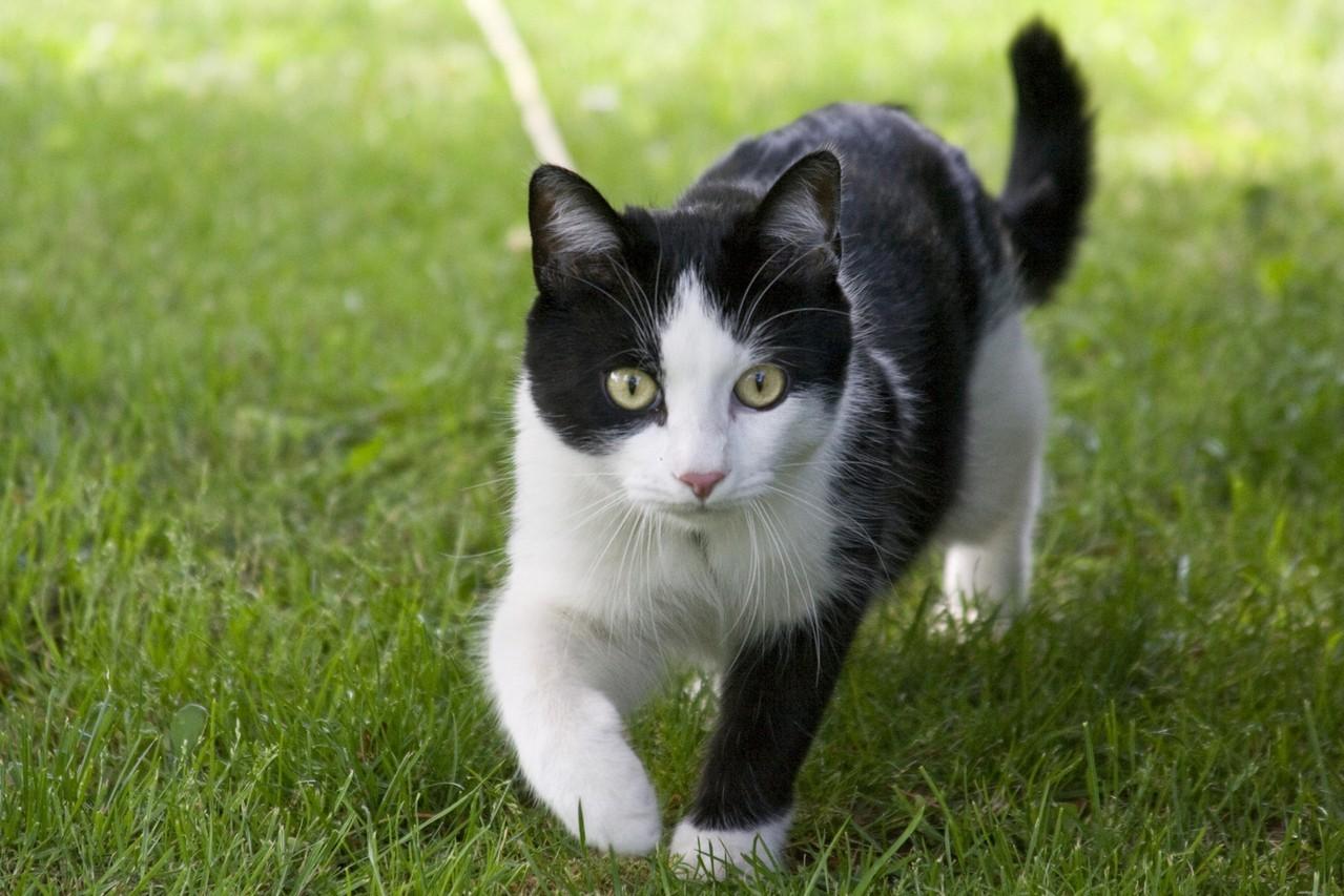 Czy karma ma wpływ na stan sierści kota?