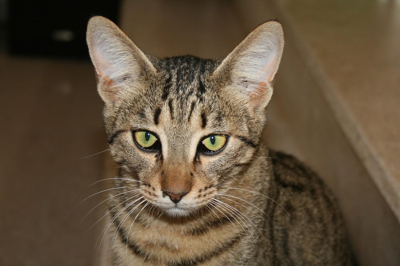 Dobór karmy dla kota – czy ma to znaczenie?