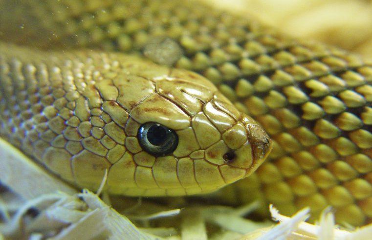 Gdzie kupić węże?